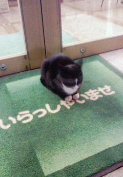 招き猫かも?1